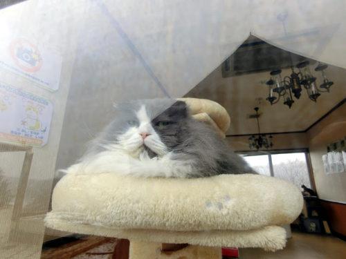 わんニャン館猫