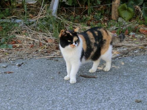 宮川湾の猫